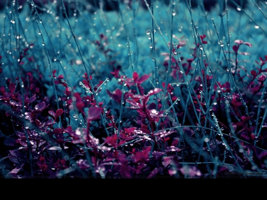 Spring-Is-My-Love-Rain-Wallpaper